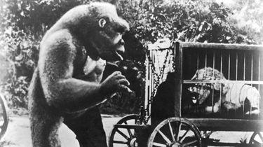 Prime primate: TCM presents