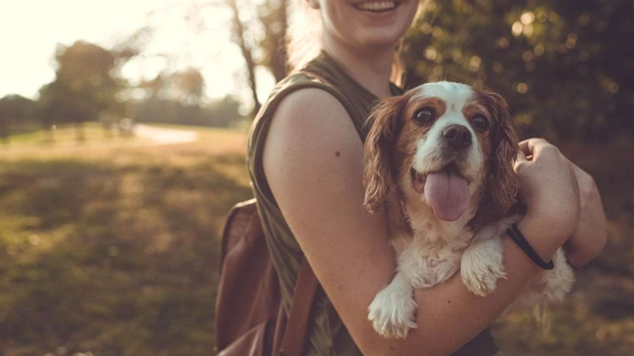 Discounts for dog training courses, DNA kits