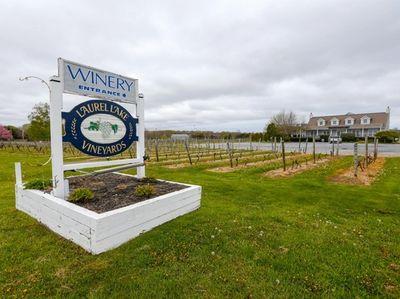 Dan Abrams' plan is to transform the vineyard