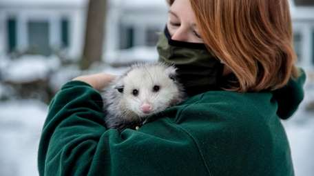 Program director Veronica Sayers holds a rescued oppossum