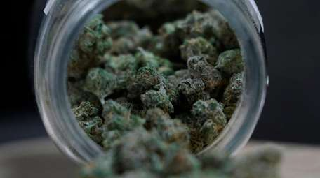 Marijuana buds are shown at Huron View Provisioning