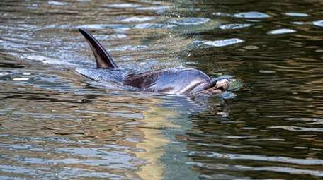 Two dolphins made their way into Jockey Creek
