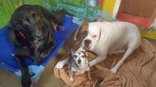 The Nassau SPCA is seeking a new home