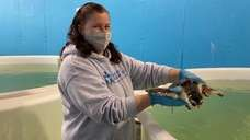 On Friday, the Hampton Bays-based Atlantic Marine Conservation