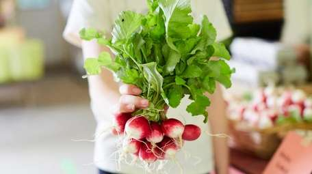 Radishes from Restoration Farm in Old Bethpage.