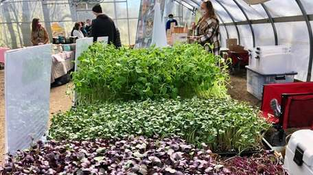 Microgreens from Black Gold Rooster Farm are sold