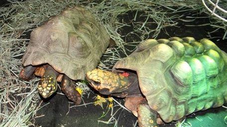 Karen Testa, executive director of Turtle Rescue of