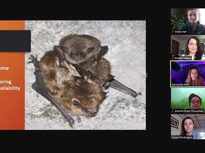 The Long Island Bat Working Group discusses topics