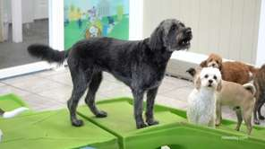 Newsday's Marissa Sarbak visited two dog day care