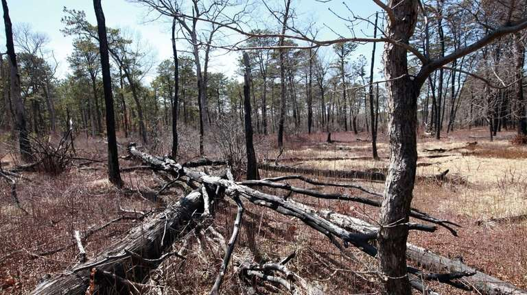 Downed trees from recent storms not only raise