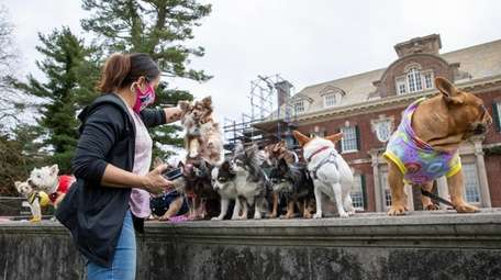 Dogs line up and pose in front of