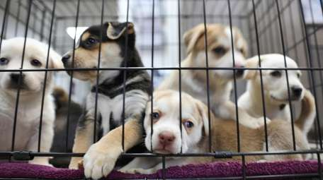 April is Prevention of Cruelty to Animals Month.