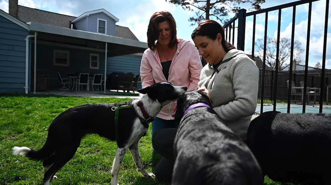 Many Long Islanders got a new pet during