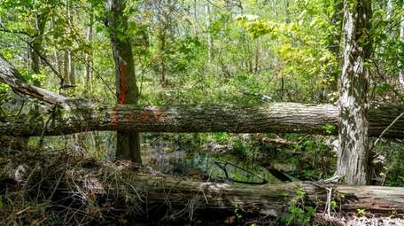 The Peconic Land Trust acquired the approximately half-acre
