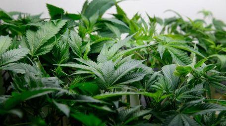Now that the use of recreational marijuana has