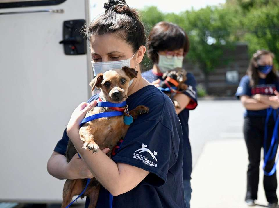 More than 40 dogs rescued from the midwest