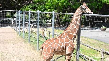 Long Island farms and zoos will be welcoming