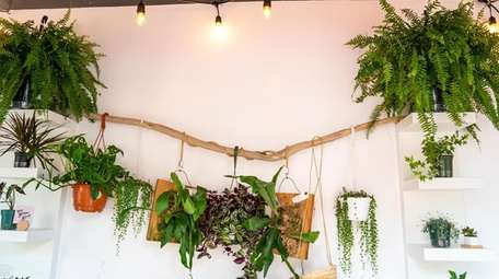 A display of house plants at the North