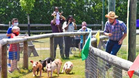 Pig races are among the special events that