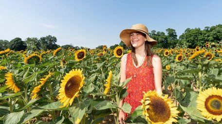 The sunflower maze at Rottkamp's Fox Hollow Farm