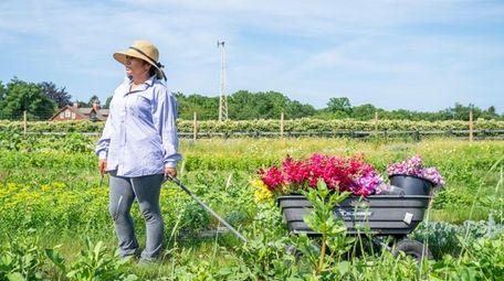 Emerika Galdamez, field boss at North Fork Flower