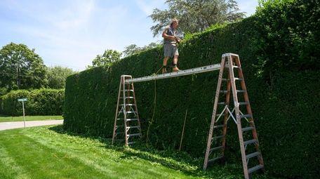 Mark Zaloga from Southampton trims a hedge along