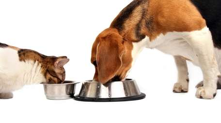 HOME COOKING FOR YOUR DOG AND CAT Learn