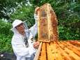 Steven Chen, of Holbrook, tends to the honeybee