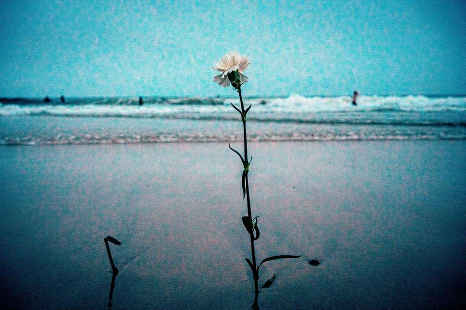 A single flower sticks out of the sand