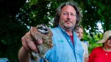 The Town of North Hempstead released northern bobwhite