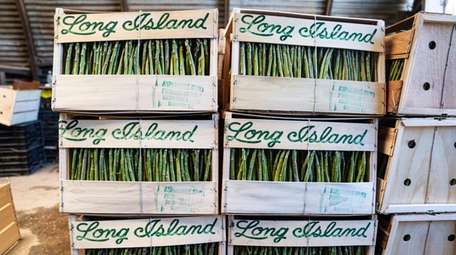 Crates of asparagus packed and ready for pickup