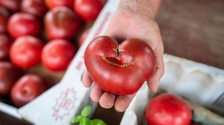 A Cherokee Purple heirloom tomato at Zilnicki Farms