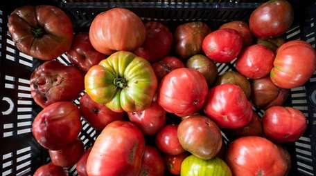 Heirloom tomatoes including Pink Boar and Striped German