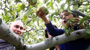 Apple picking begins, the Famous Food Festival comes