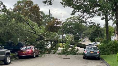 A tree toppled onto power lines early Thursday
