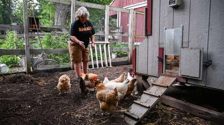 Jill Werfel with hens at her Stony Brook