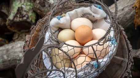 Eggs laid by the Krzenski family's hens in