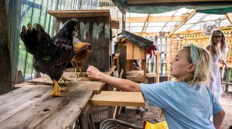 Cameron Krzenski, 10, feeding some of the hens