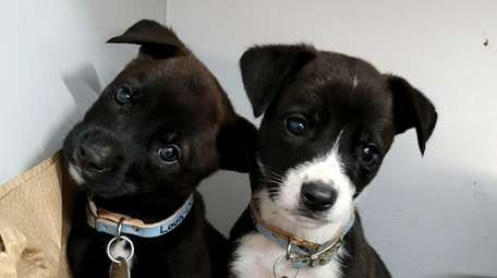These two puppies are among more than 50