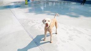 Nassau's sprinkler pools on Sunday were transformed into