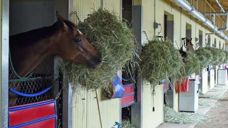Horses in their stables at Belmont Park in