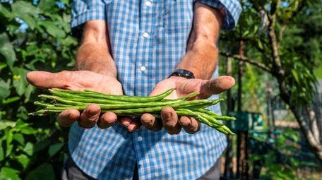 Pinto fagiolini are among the vegetables Nick Ranieri