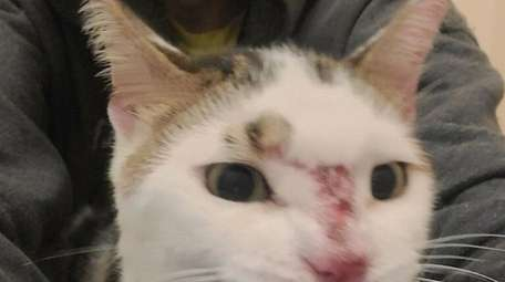The cat suffered some bruises, some of which