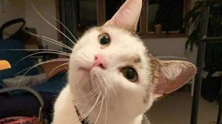 Ettore, a cat who was lost for 18