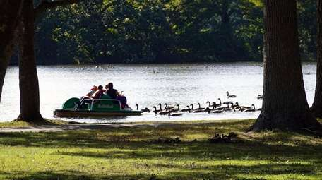 Paddleboat riders are followed by ducks on the