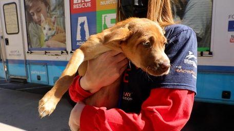 North Shore Animal League America's Emergency Rescue Team