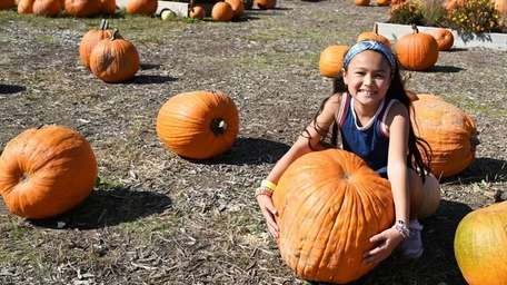 Pumpkin picking and corn mazes are open for