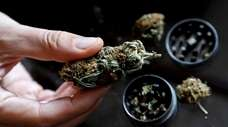 Though cannabis is no longer illegal, an employee