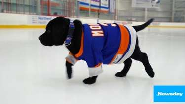 The New York Islanders have a new friend,