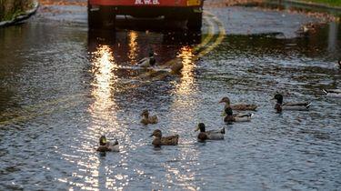 Ducks swim in floodwaters by the Peconic Riverwalk